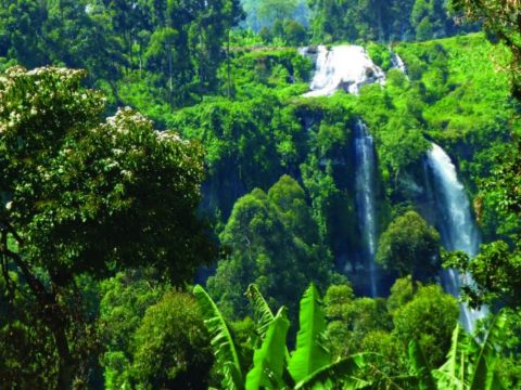 Research- The role of Forests in Climate Change Mitigation