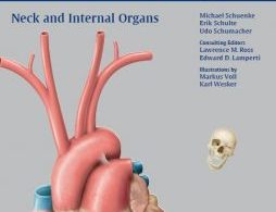 Neck and Internal Organs pdf